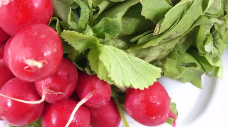 rabanete : Radish with leaves Stock Footage