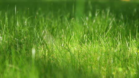 terep : SLOW MOTION: green grass lawn in a sunny summer afternoon Stock mozgókép