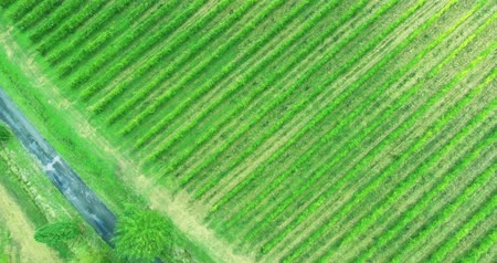 bird's eye view : Birds eye view at Toscana vineyard with a lonely road between. Italian landscape from above. Stock Footage