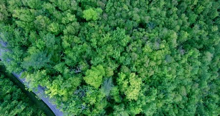 точка зрения : Road through a dense green forest. The car is moving along the road