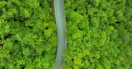 вниз : Cars drive along the forest road. Extreme driving Shooting from a helicopter. Top view in motion. Aerial shot Стоковые видеозаписи