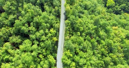 точка зрения : View from above on a forest road. Road in the middle of the forest. Aerial shot, shooting from a helicopter