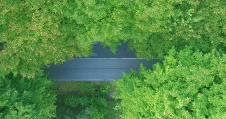 управлять : Roadway is visible through beautiful thick green trees in the summer during the daytime. Aerial shot, the camera does not move