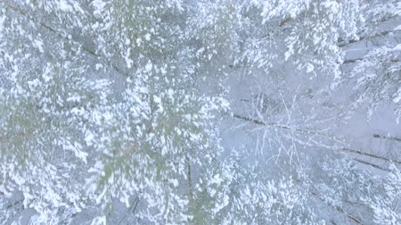 záběry : Aerial shot flight over the winter Russian forest with fluffy firs in the snow top view Dostupné videozáznamy