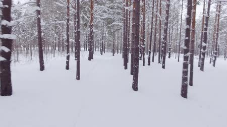 mocný : POV walking of someone in the beautiful winter forest, white fluffy snowdrifts and tall mighty trees Dostupné videozáznamy