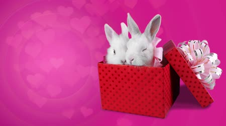 kopya : A romantic couple of rabbits sitting in the present box and relaxing, floating little hearts on pink background, copy space Stok Video