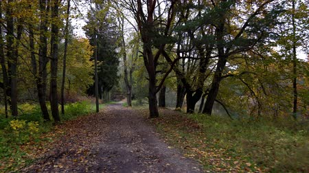 uklidňující : walk along the path in the autumn park. yellow leaves create an unforgettable comfort of autumn and give warmth. the riverbank is very picturesque and soothing ... 4K