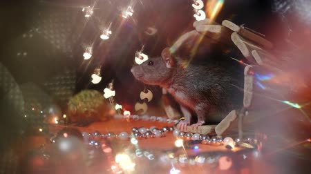 fare : Symbol of 2020, the rat sits on the background of a Christmas tree decorated. A gray rat sits in a house on a background of bright lights. Beautiful bokeh. Black background. New Year concept. Stok Video