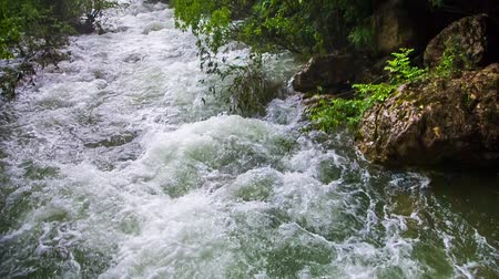 rzeka : Pan shot of picturesque place - mountain river stream flowing down amidst lush green trees and bushes.  The shot was captured in Crimea region.