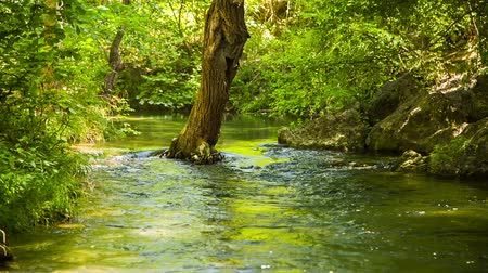 деревья : Locked down shot of a beautiful scenery - calm mountain river peacefully flowing in green forest, there is one tree growing in the flow.