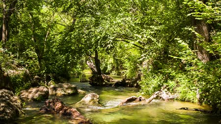 tájak : Tranquil scene. In the frame there is a picturesque, bright view of greenery moved my light breeze and calm mountain river peacefully flowing among stones in sunny green forest.  The shot was captured in Crimea.