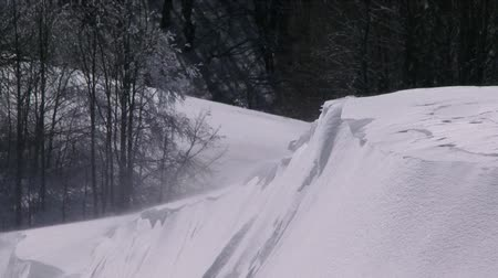 kar fırtınası : This is a shot of strong snowstorm in the forest. Stok Video