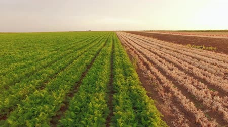 agronomie : Vegetable Fields On Rural Farmland
