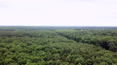 Észak amerika : Aerial view of a beautiful forest near Boston