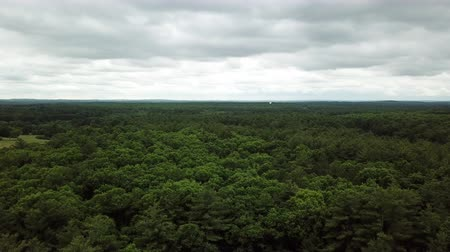 meio dia : View from the drone flying over the forest.USA Vídeos