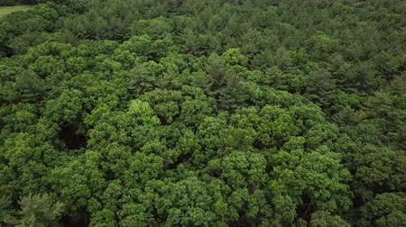 Бостон : Forest near Boston.Aerial view from the drone.4K