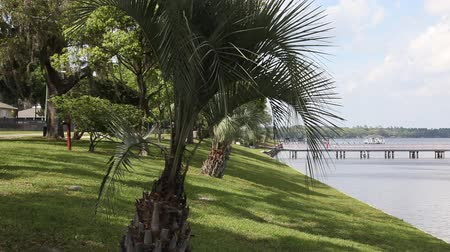 exotikou : Palm tree is swaying in the wind at the river
