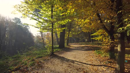 złoto : Walk Along the Path with Leaves in Autumn Park