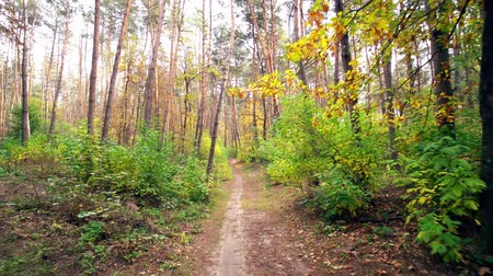 maravilhoso : Walk Along the Path with Leaves in Autumn Forest