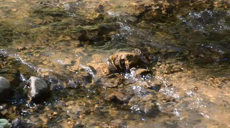 Mountain stream in the forest. River flows over rocks. Fallen leaf floating on the water. Stock Footage