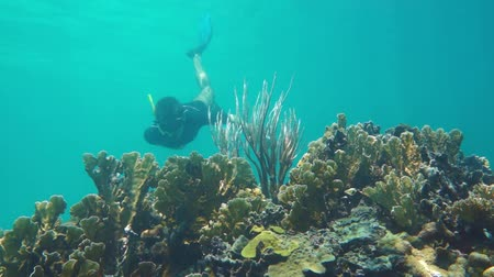 Man underwater snorkeling on a coral reef in the Caribbean sea with fire corals and a gorgonian, 50fps