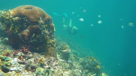 Man snorkeling underwater on the edge of a coral reef with tropical fishes, Caribbean sea, Panama, Central America, 50fps