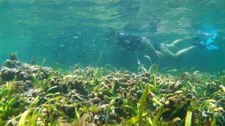 Man underwater swims in a shallow coral reef with seagrass and small fish, Caribbean sea, 50fps