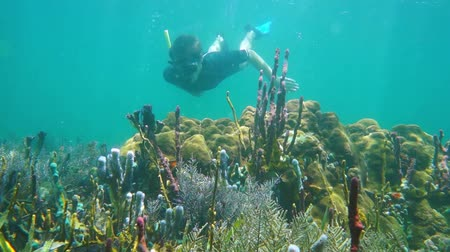 Underwater scene with man snorkeling explores a colorful coral reef in the Caribbean sea, 50fps