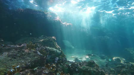 Underwater, waves breaking on reef with sunbeams through water surface and a shoal of fish, natural sunlight, Caribbean sea, 50fps