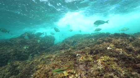 cote : Underwater waves breaking on rock with sea bream fishes below water surface, Mediterranean sea, France Stock Footage