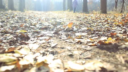 bospark in de herfst Stockvideo