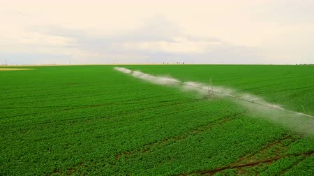 cropland : Industrial farming. Aerial video footage: Irrigation of a lettuce field in Europe in Summer. Watering and irrigating wheat fields.
