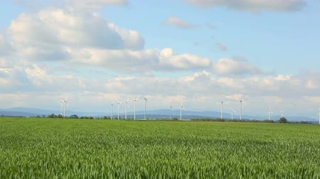 west wing : Poland wind energy Timelipse. Landscape with windmills and blooming Wheat field