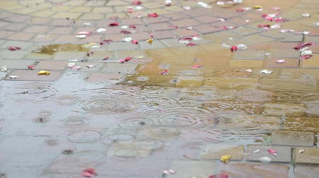 drip bulb : rain falls into a small puddle. Near the rose petals of the wedding day. Unsuccessful wedding. Rain on the wedding day