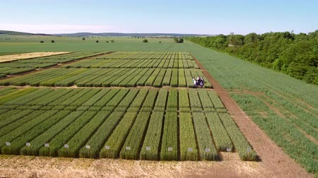 agro : Studies of rye and wheat varieties. Flying over the field of plots for crop research. Scientists are testing the effect of diseases on rye and wheat