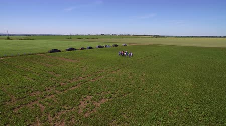 soya : Aerial drone flying over soybean field in Sunny weather