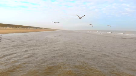 bezmotorové létání : Aerial view Gulls fly over the northern sea. Slow motion 120 fps. Netherlands, Zandvoort morning on the beach