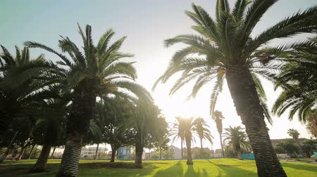 Валенсия : bright sun breaks through the leaves of palm trees that grow in the park. Valencia, Spain