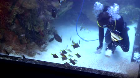 shark : diver is in a big aquarium between tropical fish and sharks and feeds them from the hands Stock Footage