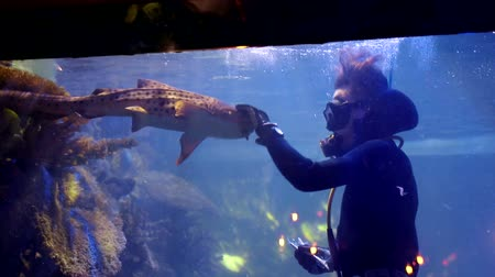 school of shark : diver is in a big aquarium between tropical fish and sharks and feeds them from the hands Stock Footage