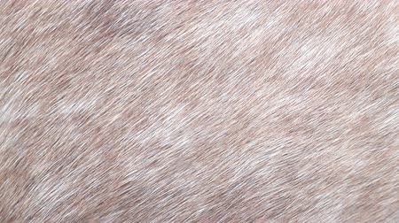 benekli : Background for design, horse and pig skin texture