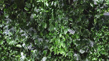 odlišný : Collage of collected different types of green leaflets. Background or texture of light and dark green leaves. Dostupné videozáznamy