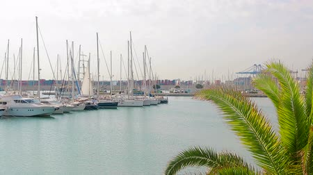 ancorado : Port of Valencia where sailboats and yachts are located. Morning in the port Tourist place, walk near sailboats Stock Footage