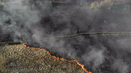 charred : Large-scale fires. Burning grass and trees in a large area. A group of firefighters assesses the situation at the scene of the fire Stock Footage