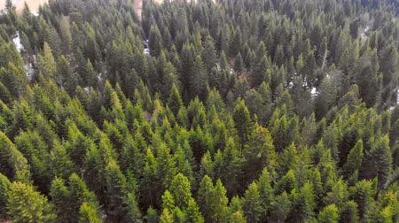 preservation : Aerial Flying over a forest of green trees. Background of green trees. Drone footage