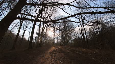 musgo : Camera movement between trees without leaves. The sun shines into the camera against the blue sky and branches. The dark countryside
