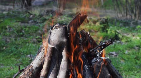 hearth : Burn fire with wood in the Forest. Green lawn in the forest on the background of fire