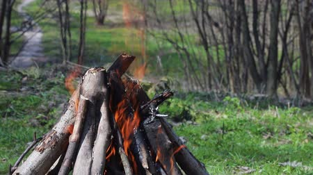 charbon : Burn fire with wood in the Forest. Green lawn in the forest on the background of fire
