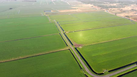nederlands : Green fields and canals for grazing in the Netherlands