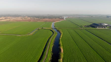 Green fields and canals for grazing in the Netherlands